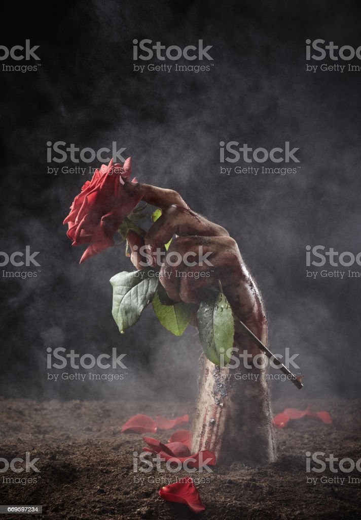 Beautiful red rose in male dirty hand stock photo