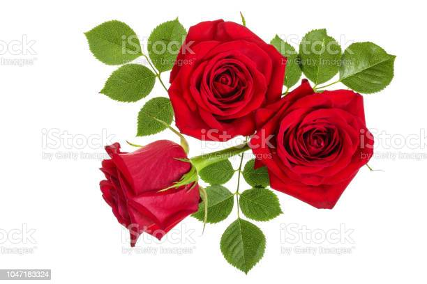 Beautiful red rose isolated on white background picture id1047183324?b=1&k=6&m=1047183324&s=612x612&h=iabfmtg3jwq7wmk5rtbgo z5y2k5vsyoxnxzywzxxpy=