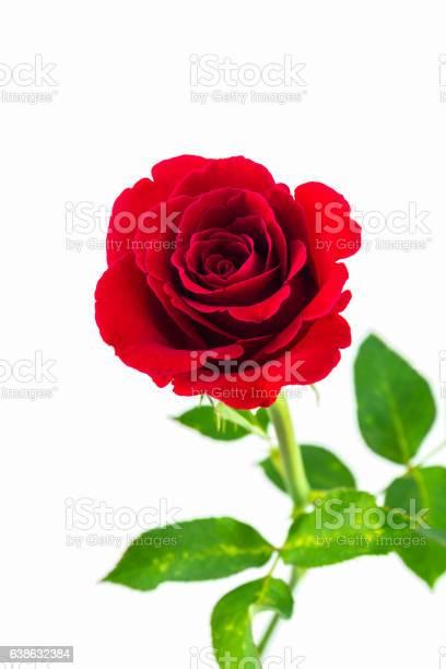 Beautiful red rose picture id638632384?b=1&k=6&m=638632384&s=612x612&h=nyjbfw19ymgxztzzctoevioteoqwvbw5jdxhaewrvom=