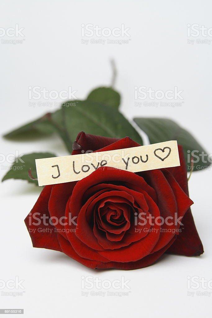 Linda Rosa Vermelha Com I Love Youfrase Em Inglês Fotografias De