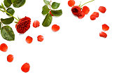 istock beautiful red rose with leaves isolated on white background with copy space 1091609918