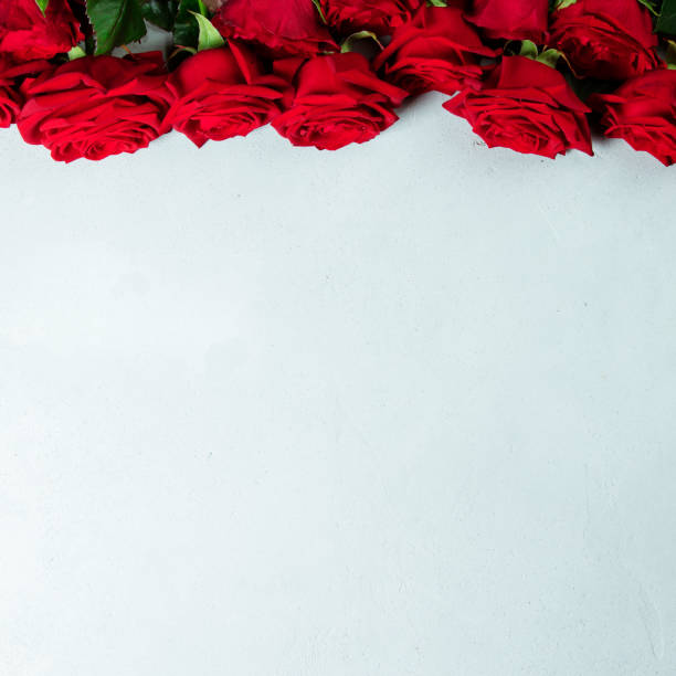 Beautiful red roses, flay lay, space for text stock photo