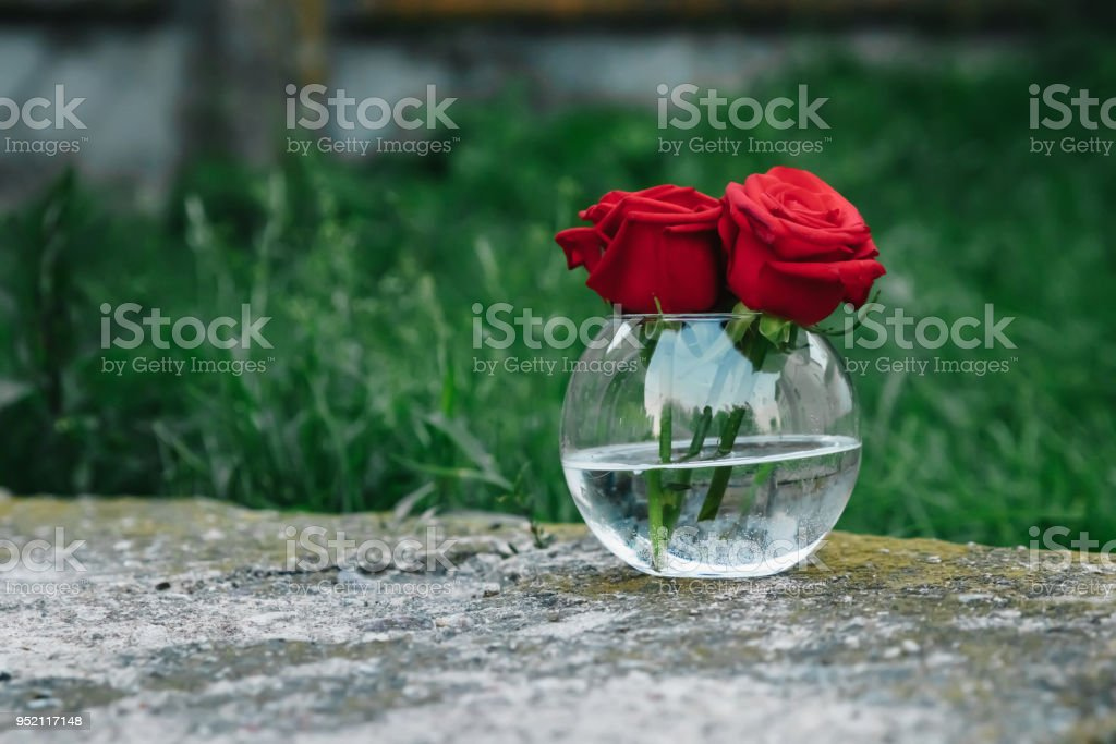 Beautiful red roses in vase on wooden table on gray background stock photo