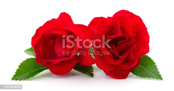 Two beautiful red roses on a white background.