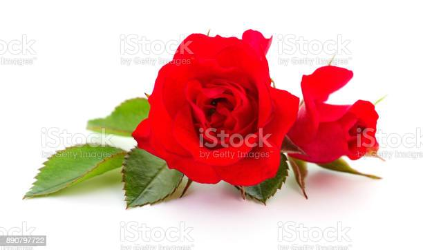 Beautiful red roses picture id890797722?b=1&k=6&m=890797722&s=612x612&h=7fhjic9cppwzk8eqeh6vgc 1njrd8 mebdfgsyzwzjy=