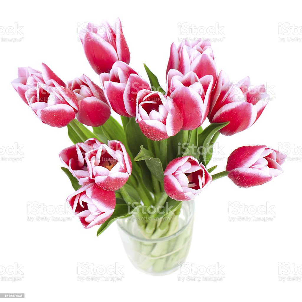Beautiful red tulips are a top view royalty-free stock photo