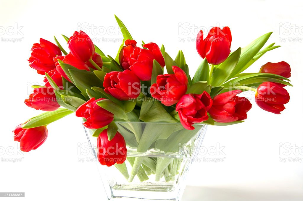 Beautiful Red Tulips in Vase of Glass royalty-free stock photo