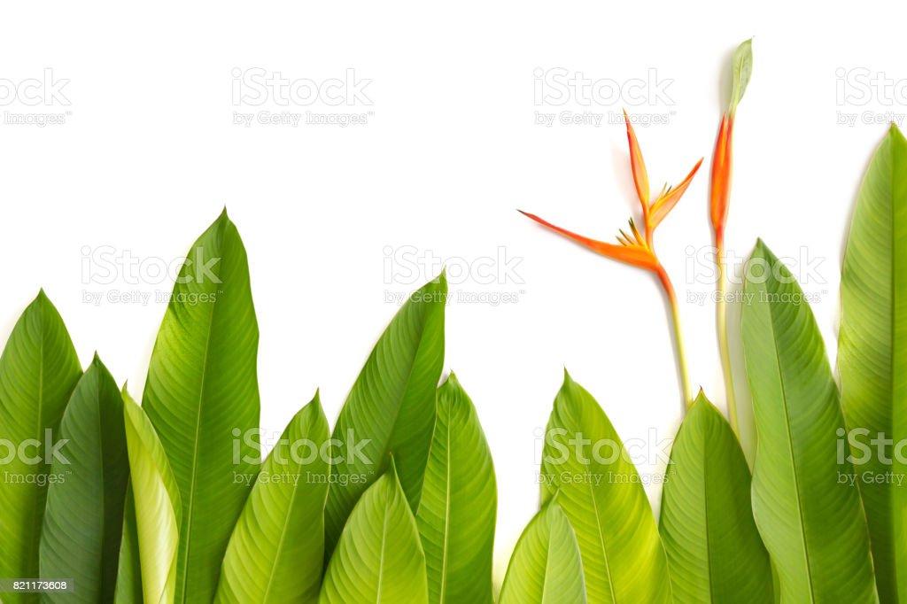 Belle Rouge Jaune Et Orange Heliconia Fleur Fleur Tropicale De