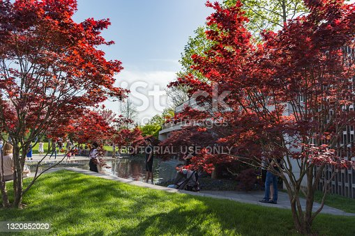 istock Beautiful red-leaved maples near an artificial pond. People walk in a well-maintained city park on a sunny day. 1320652020