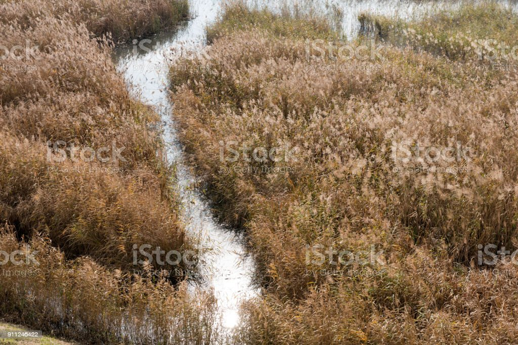 A beautiful reed forest with faded colors stock photo