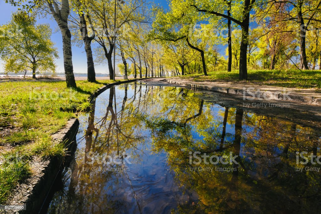 Beautiful reflection of trees in a puddle in a city park in the early morning I stock photo