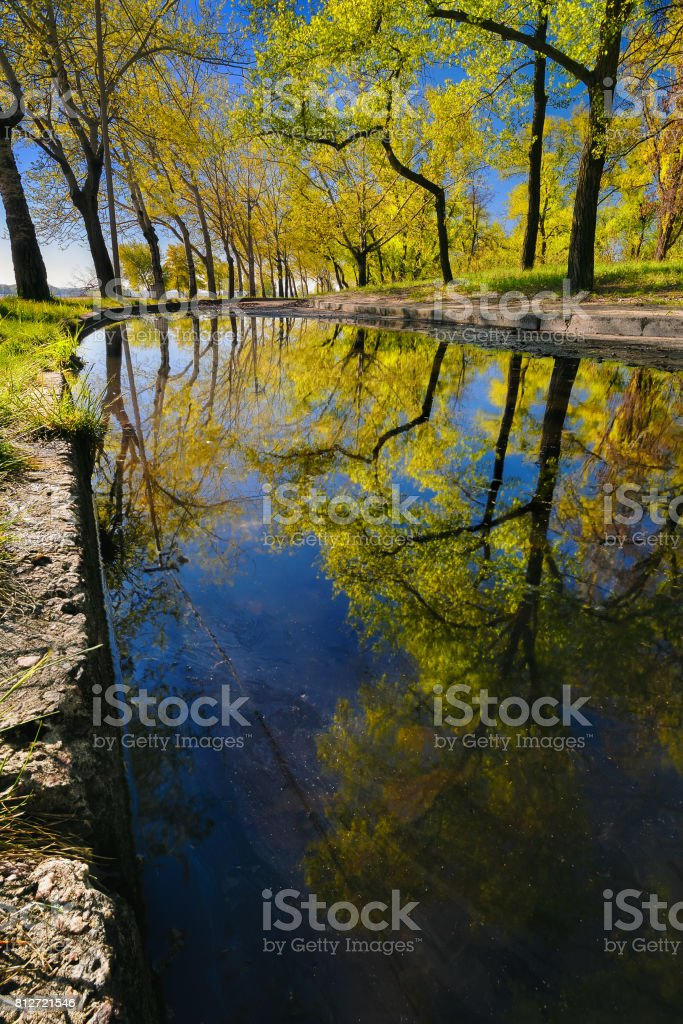 Beautiful reflection of trees in a puddle in a city park in the early morning II stock photo