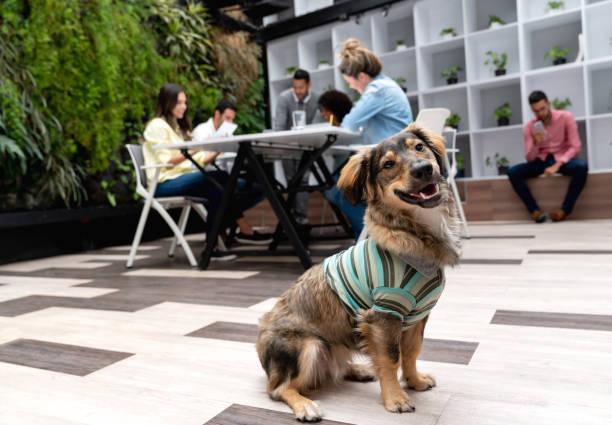 schöne rettungshund - hunde aus dem tierheim stock-fotos und bilder