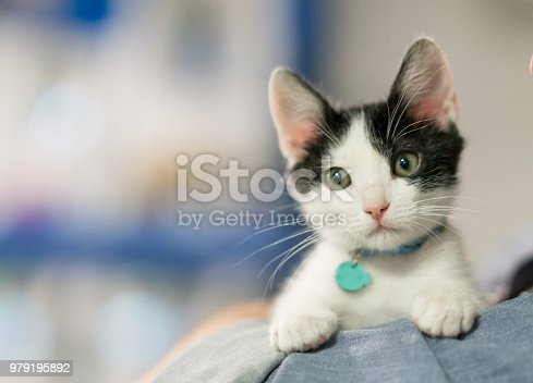 Close-up on a beautiful rescued kitten looking at the camera – animal concept