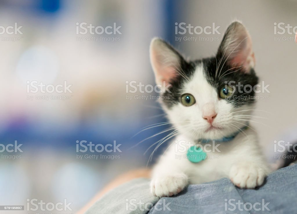 Beautiful rescued kitten stock photo