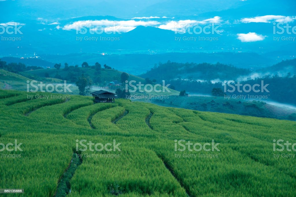Beautiful rice fields and mist on terraces on blue hour before night time in Thailand at Ban Pa Pong Pieng in Mae chaem, Chaing Mai. stock photo