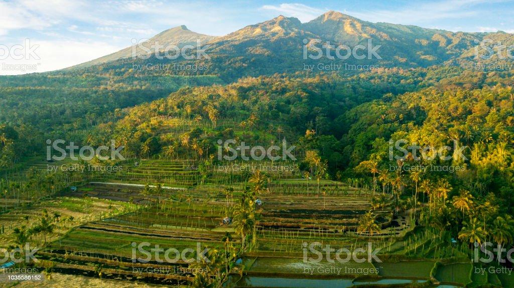 Terrazas De Arroz Hermosa Cerca Del Volcán De Rinjani Foto