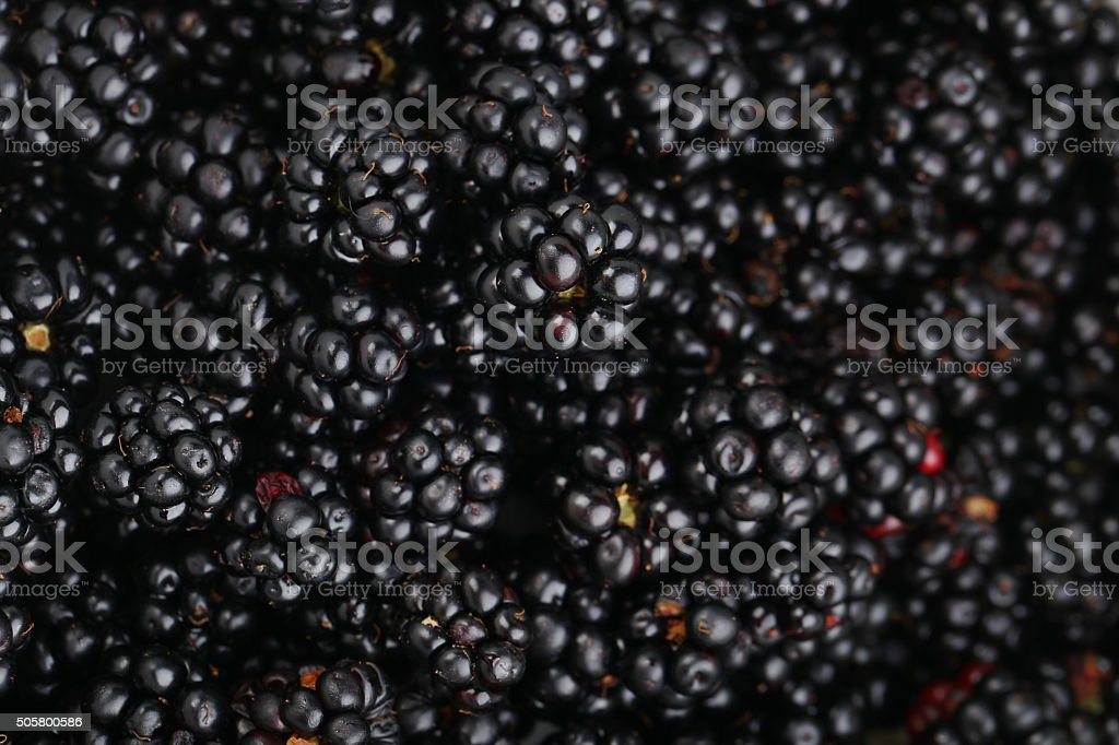 Beautiful Ripe Blackberry Background Close Up Stock Photo