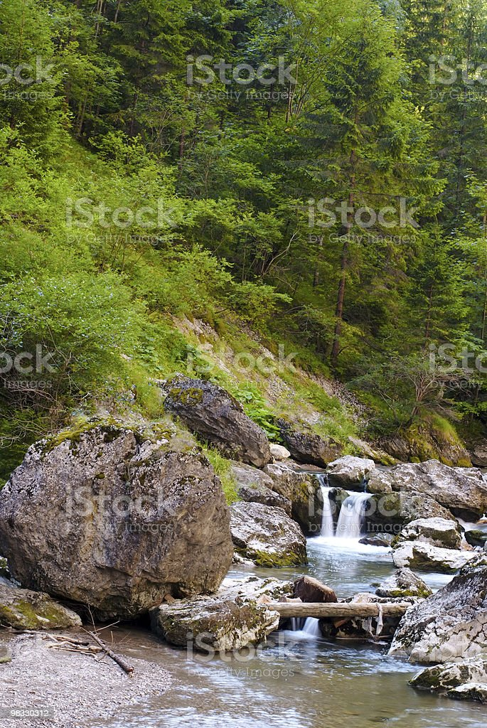 Beautiful river flowing in green forest royalty-free stock photo