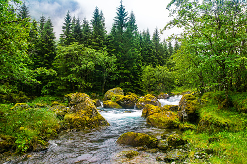 Beautiful river with big stones in amazing forest. Location: Scandinavian Mountains, Norway. Artistic picture. Beauty world.