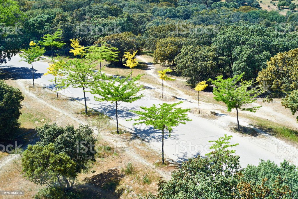 Beautiful road in park with young trees photo libre de droits