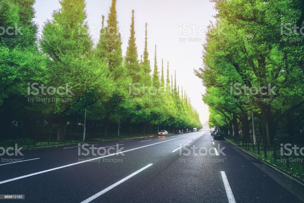 Beautiful road with trees on sideroad stock photo