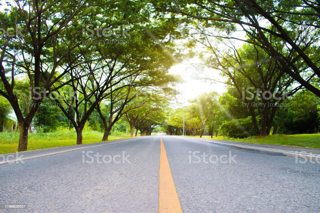 Beautiful Roads With Green Trees Along The Route On Sunny Spring Day Stock Photo Download Image Now Istock