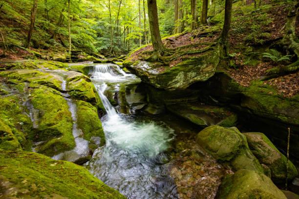 Beautiful rocky sundown forest river cascades summer day stock photo