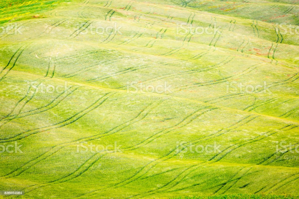 Beautiful rolling landscape. Green meadows of Tuscany, Italy stock photo