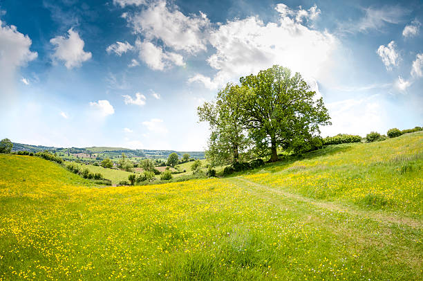 beautiful rolling landscape on a summers day in the cotswolds - meadow stock pictures, royalty-free photos & images