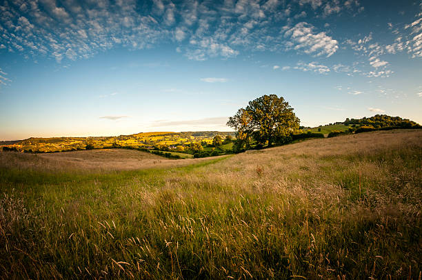beautiful rolling landscape on a summers evening in the cotswolds - rural scene stock pictures, royalty-free photos & images