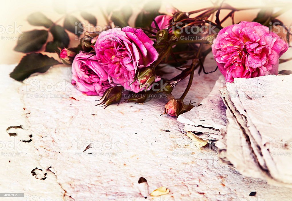 beautiful romantic background with pink roses, petals and handma stock photo