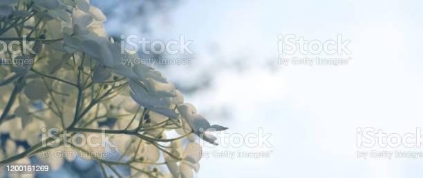 Beautiful romantic floral hydrangea banner picture id1200161269?b=1&k=6&m=1200161269&s=612x612&h=ho tmrvg3vqgcgyf 7stlttt7yaovcwwpswyuvcnq3g=