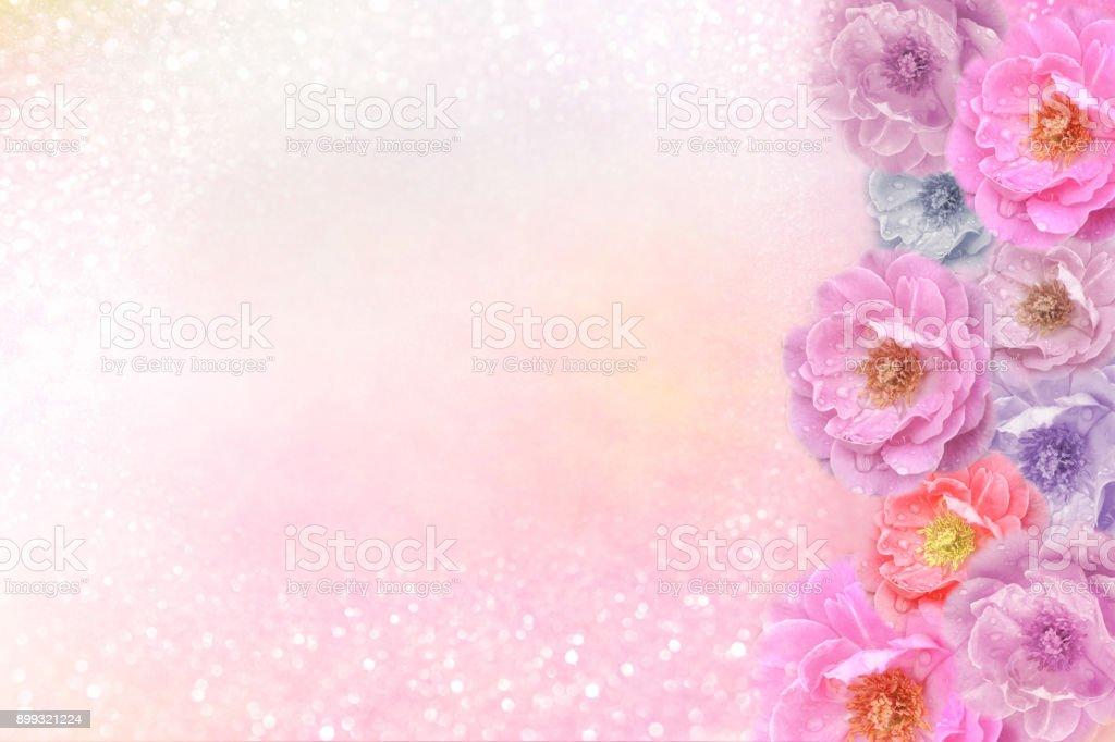 Fotografía de Hermoso Romántico Rosas Púrpura Florecen De Frontera ...