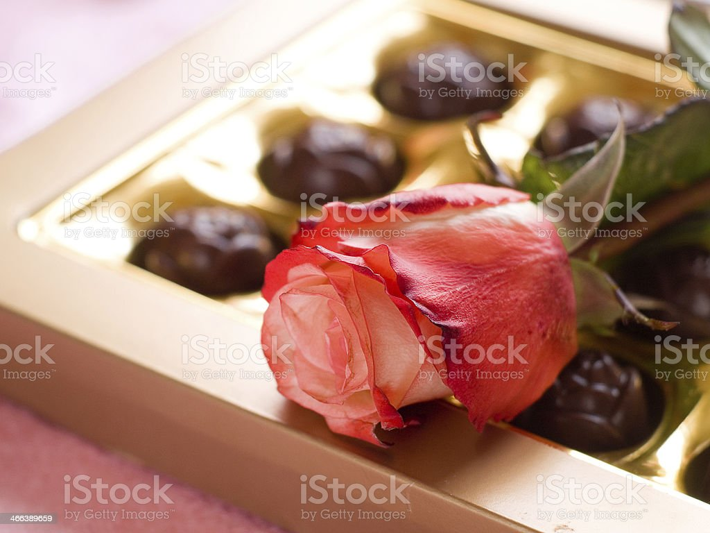Beautiful rose and chocolate candies stock photo