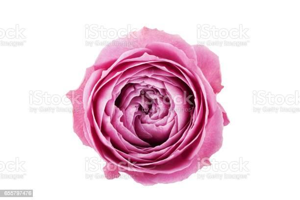Beautiful rose flower isolated on white background picture id655797476?b=1&k=6&m=655797476&s=612x612&h=o sberitxjwmvlojkhznqwjyjzriny6at8oepijluye=