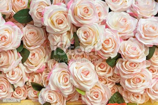 istock Beautiful Rose flowers background 664668876