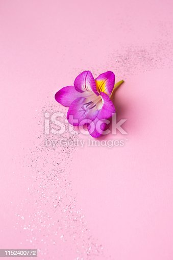 652288118istockphoto Beautiful rose freesia flower on a pink background with sparkles. 1152400772