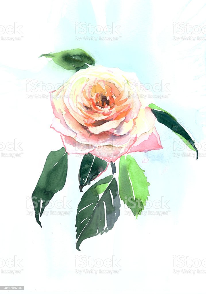 beautiful rose garden watercolor hand illustration stock photo