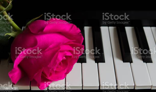 Beautiful rose on piano keys romance celebration postcard mothers day picture id1159174231?b=1&k=6&m=1159174231&s=612x612&h=khatngxtegugrouzdenjoobrrn6khsx c93wd kuybq=