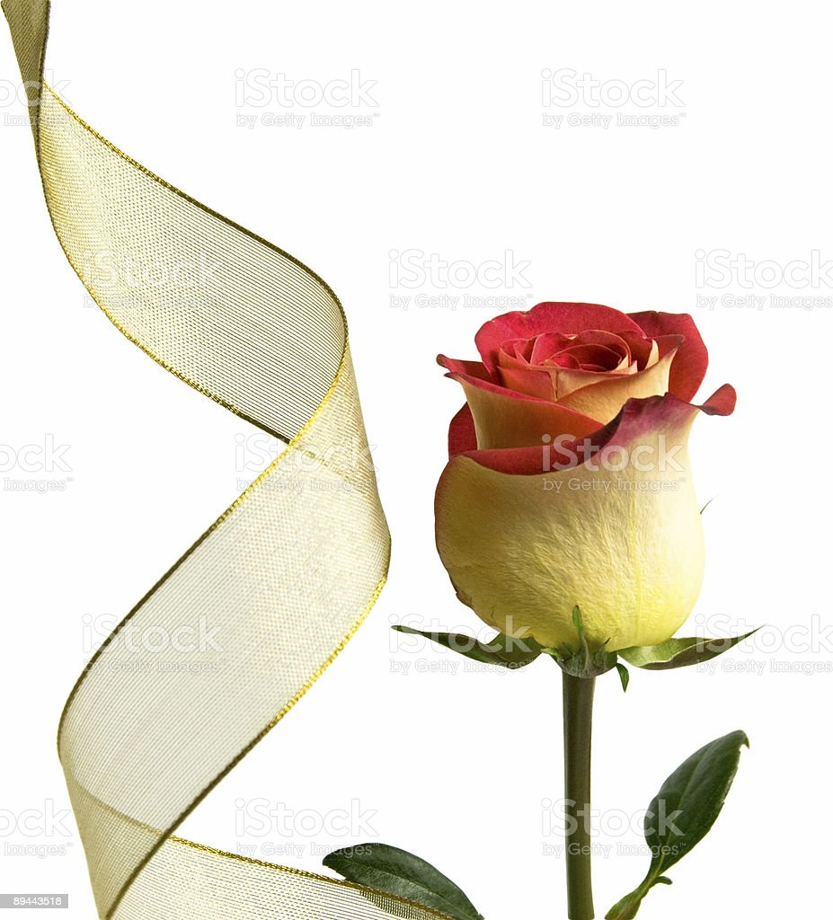 Beautiful Rose with Golden Ribbon royalty-free stock photo