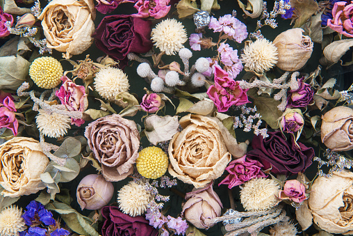 Beautiful roses background