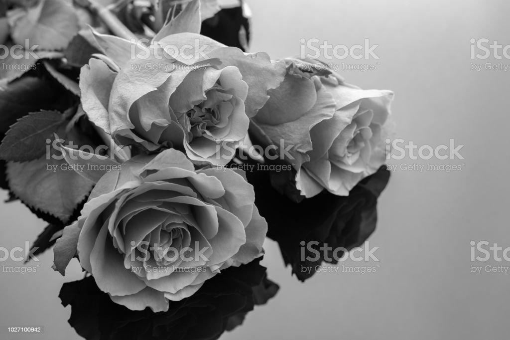 bilder rosen schwarz  malvorlagen gratis