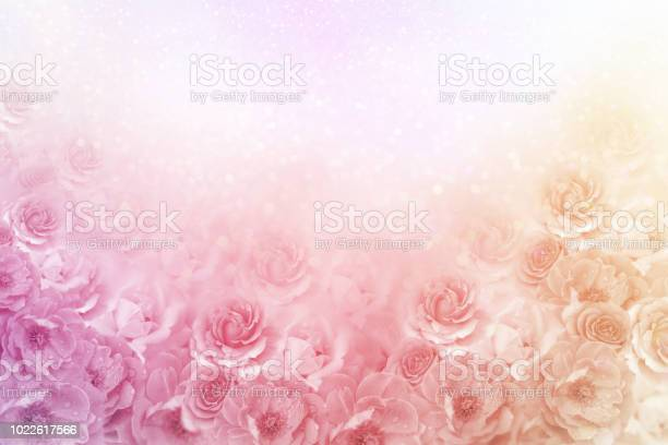 Beautiful roses flower border in soft vintage tone color with glitter picture id1022617566?b=1&k=6&m=1022617566&s=612x612&h=ibbariiskbjy46y s6u mt0phae dtjuvippcf3u7p8=