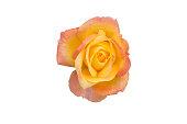 istock Beautiful roses frame 868710618