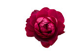 istock Beautiful roses frame 868711046