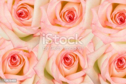 six rosesCheck out my rose photos
