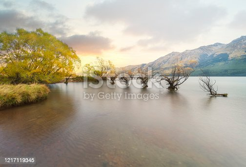 Beautiful Row of willow trees on Lake Wakatipu in Glenorchy, New Zealand