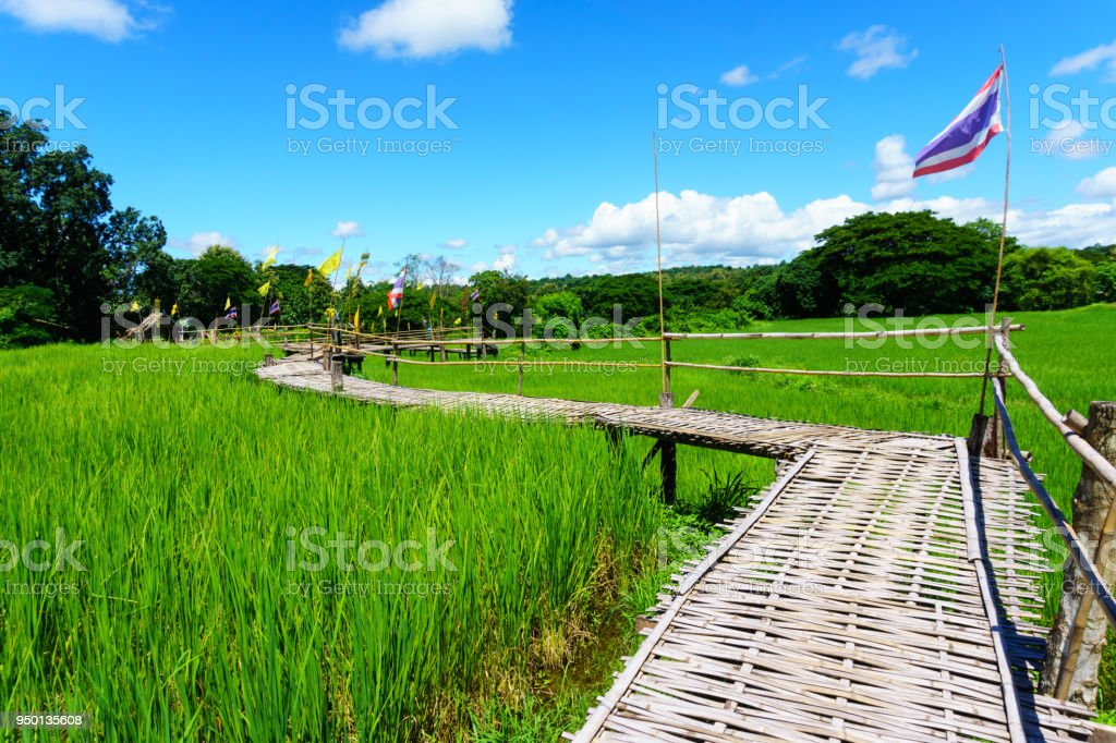 beautiful Rural bamboo bridge across the rice paddy fields with blue sky and fluffy cloud in sunny day at countryside. lampang, northern part of thailand. Bridge name 'Sapan Boon Wat Pa That San Don' stock photo