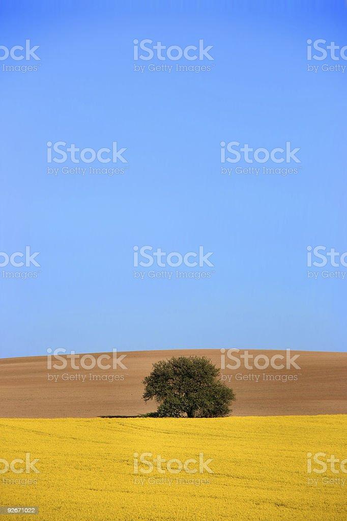 Beautiful rural fields landscape royalty-free stock photo